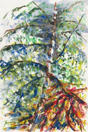 69 Birch Tree